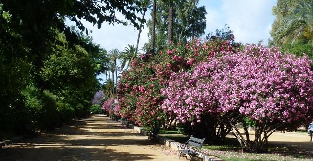 Séville, jardins